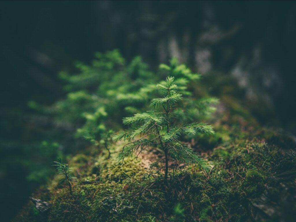 ISM - ¡Cursos Online en Medio Ambiente!